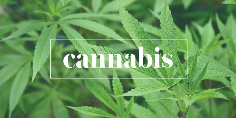 Cannabis_Banner-1000x500